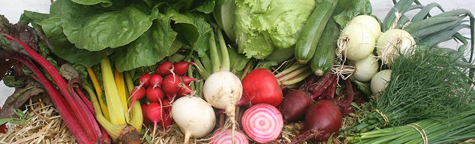Økologisk høstmarked på Stensbølgård